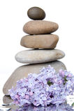 Composition of stacked pebbles with lilac Stock Images