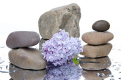 Composition of stacked pebbles and lilac Royalty Free Stock Photos