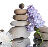 Composition of stacked pebbles with lilac Stock Photos