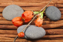 Composition of stones with a sprig of flowers. Stock Photos