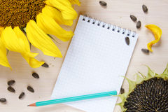 Composition with sunflowers and empty notepad Stock Photo