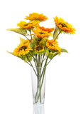Composition from sunflowers in glass vase isolated on white back Royalty Free Stock Images