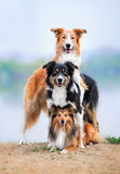 Composition of the three dogs Stock Photos
