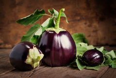 Composition with Three Eggplants, still life Stock Photos