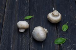 A composition of three mushrooms and basil leaves on a dark wooden background. White mushrooms and black background Royalty Free Stock Images