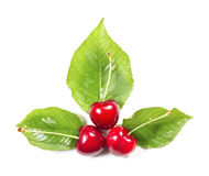 Composition of three ripe cherries and leaves Royalty Free Stock Photo
