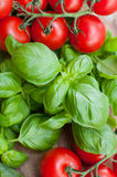 Composition of tomatoes and basil Royalty Free Stock Photography