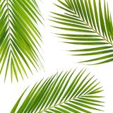 Composition of tropical palm leaves on white background. Flat lay, top view. Composition of tropical palm leaves on white background. Flat lay stock photos