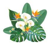Composition tropicale avec l'oiseau des fleurs et du zantedeschia de paradis Illustration de vecteur illustration stock