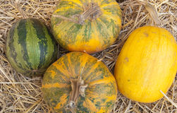 Composition from various pumpkins and straw Stock Photos