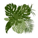 Composition verte avec les feuilles tropicales simples illustration libre de droits