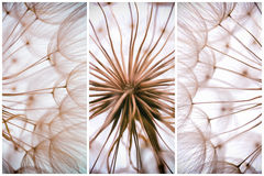 Composition - Vintage watercolor abstract background - monochrom Royalty Free Stock Images