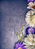 Composition of white dahlias and blue asters on dark background Stock Photos