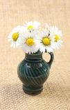 Composition of white daisies in glass vase Stock Images