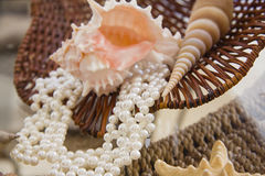 Composition of white shells and pearl bracelet or necklace Stock Image