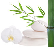 Composition with white stones, bamboo and orchid Stock Image