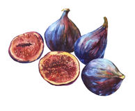 Composition whole fresh figs and figs sliced in half, showing the red pulp and seeds inside. Watercolor hand painting illustration on isolate white background Stock Photography