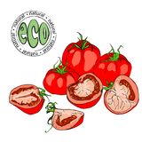 Composition of whole and pieces of tomato. Ecological natural product stock illustration