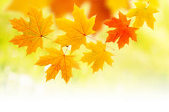 Composition with yellow autumn leaves Stock Photography