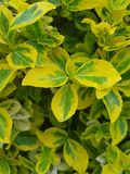 Composition of yellow-green, light green leaves. royalty free stock photos