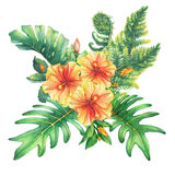 Composition with yellow-red hibiscus flowers and tropical plants. Royalty Free Stock Photo