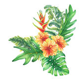 Composition with yellow-red hibiscus flowers and tropical plants. Royalty Free Stock Photography