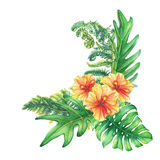 Composition with yellow-red hibiscus flowers and tropical plants. Royalty Free Stock Image