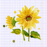 The composition of yellow sunflower painted in watercolor. RThe composition of yellow sunflower painted in watercolor for your design Stock Photos
