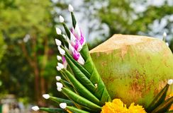 The composition of the young coconut and banana leaves crunched Royalty Free Stock Photo