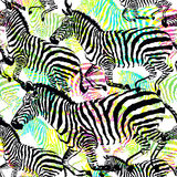 Composition zebra tropic animal in the jungle on colorful painting hand drawn background. Print seamless  pattern in fashion styles Royalty Free Stock Photos