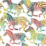 Composition zebra tropic animal in the jungle on colorful painting hand drawn background. Print seamless  pattern in fashion styles Royalty Free Stock Image