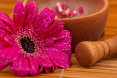 Composition zen. Flower and mortar wood Stock Photography