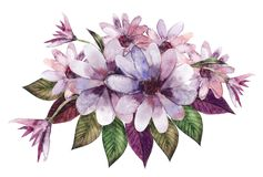 Compositions d'aquarelle ou bouquets des fleurs pourpres illustration stock
