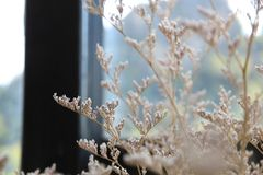Compositions florales dans des vases photo libre de droits