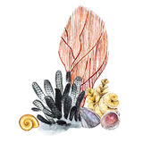 Compositions Seaweed sea life and corals object isolated on white background. Watercolor hand drawn painted illustration. Underwater watercolor background Royalty Free Stock Photography