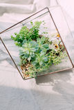 The compositions of succulents in the aquarium Royalty Free Stock Photos