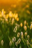Composizione astratta con erba selvatica Fotografia Stock Libera da Diritti