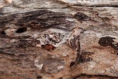 Composizione astratta di legno fotografia stock libera da diritti