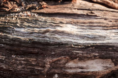 Composizione astratta di legno fotografie stock
