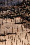 Composizione astratta di legno fotografie stock libere da diritti