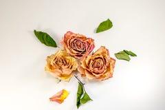 Composizione astratta - rose secche con le foglie verdi Fotografie Stock
