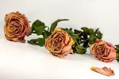 Composizione astratta - rose secche con le foglie verdi Fotografia Stock