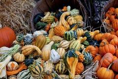 Composizione in autunno Fotografie Stock