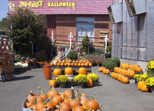 Composizione in autunno Immagini Stock