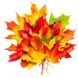 Composizione in autunno con il mazzo giallo delle foglie di acero isolato su w Immagini Stock