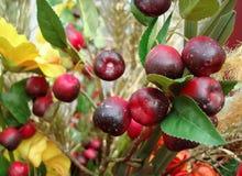 Composizione in autunno con le bacche rosse su un fondo dei fiori gialli immagine stock libera da diritti