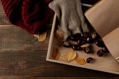 Composizione in autunno con un vassoio caldo delle castagne e della sciarpa e un libro su un fondo di legno marrone immagine stock libera da diritti