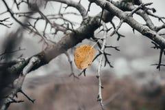 Composizione in autunno L'ultimo foglio sull'albero fotografia stock libera da diritti