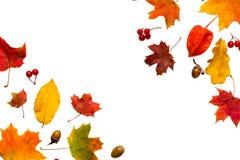 Composizione in autunno Pagina fatta delle foglie di acero di autunno e dei fiori del physalis Fotografie Stock