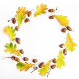 Composizione in autunno Pagina fatta delle foglie e delle pigne di autunno su fondo bianco Disposizione piana, vista superiore, s Fotografia Stock